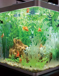 Aquarium on Pinterest
