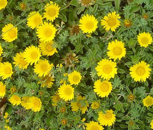 Alta Mar Flores Silvestres Primaverales