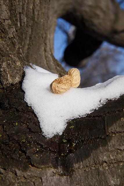 melting snow peanut