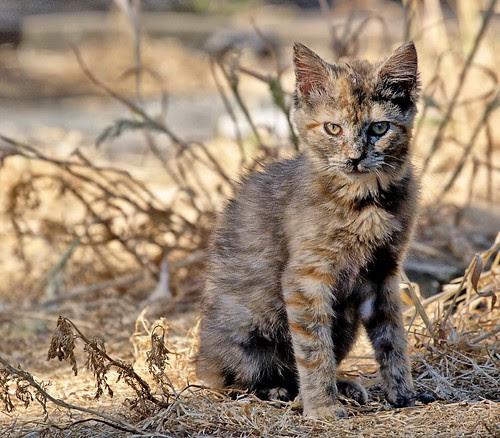 Lone Feral Kitten