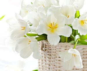 white-tulips-87788