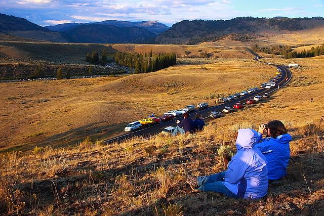 IMG_4861 Wildlife Watching