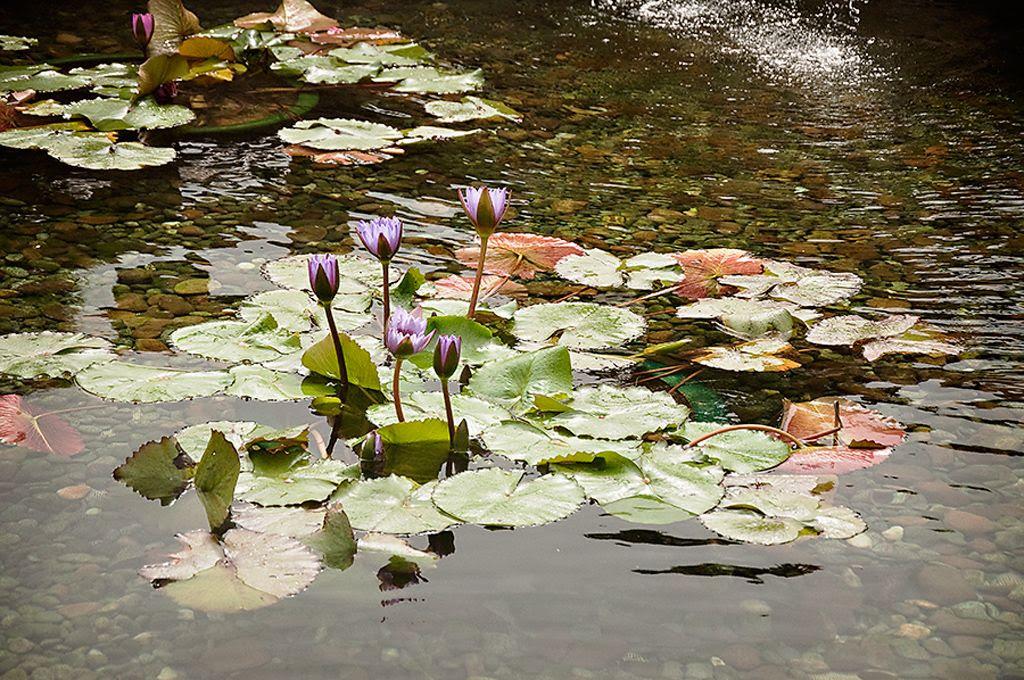photo Lilies-1_zps33bf201d.jpg