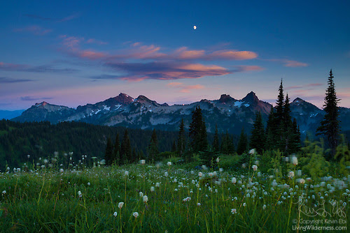 Tatoosh Range, Moon and Wildflowers