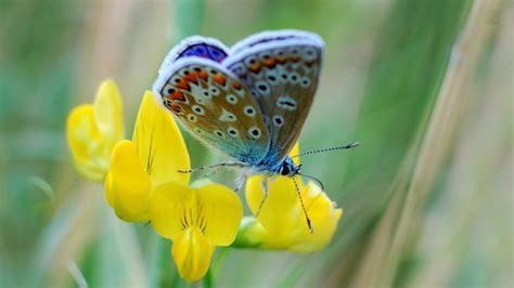 butterfly desktop wallpapers allfreshwallpaper