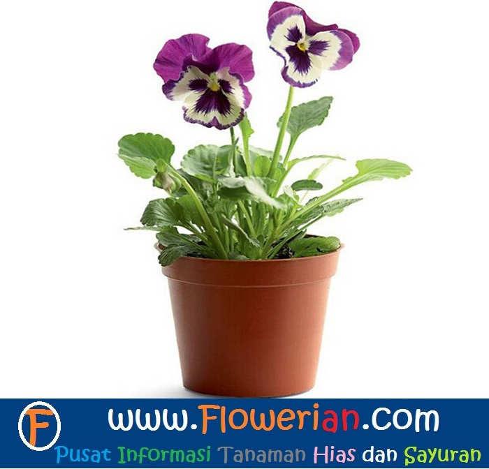 Inspirasi Baru 21 Gambar Bunga Di Pot