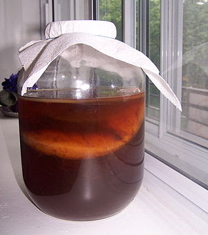 Kombucha culture fermenting in a jar