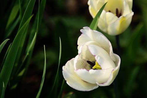 32 - Spring