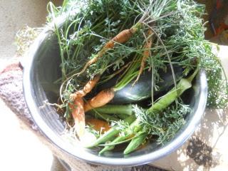 Carrots, Okra & Zucchini