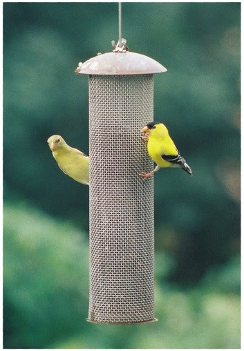 Goldfinches at feeder in spring