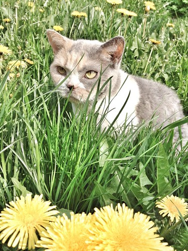 agnes and the dandelions