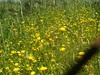 wildflowers fournes hania crete