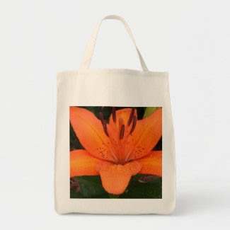 Asiatic Orange Lily