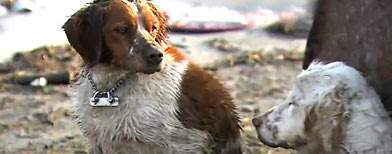 Dog survivor of tsunami. (YouTube)
