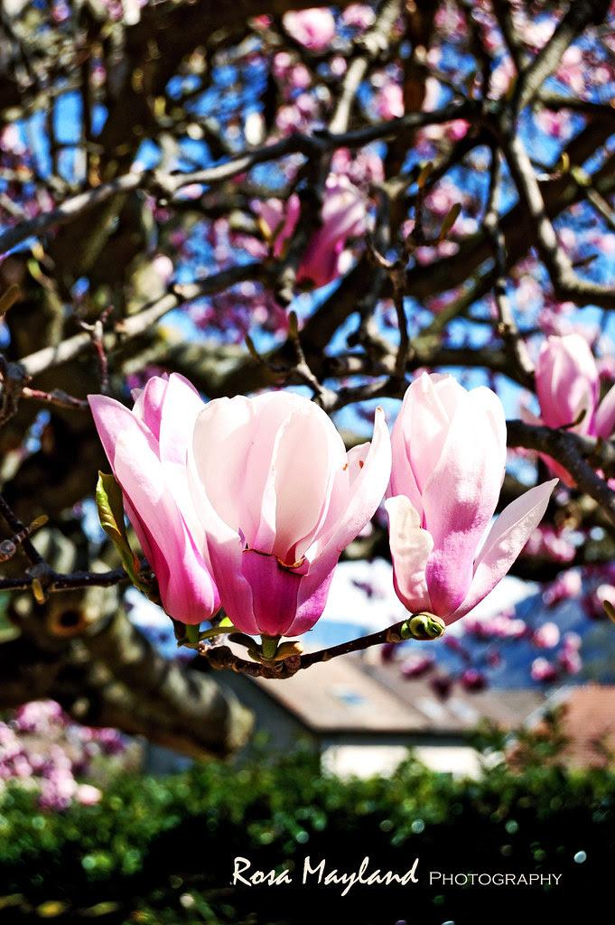 Spring Flowers 7 9 bis