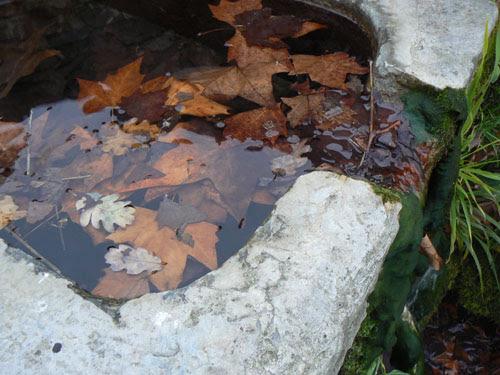 feuilles mortes dans la fontaine, sources de la Brague.jpg