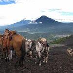 Volcan Pacaya Tour from Antigua