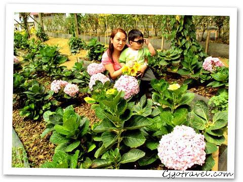 Thai Betong (Milion garden)
