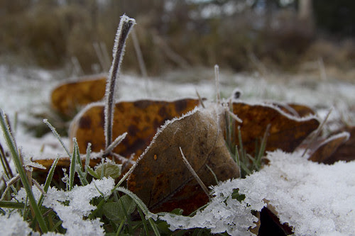 under snow and frost