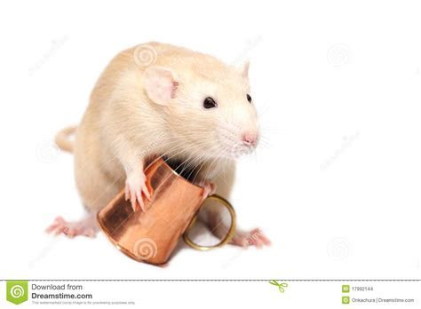 Ginger Rat With Copper Mug Stock Images   Image: 17992144