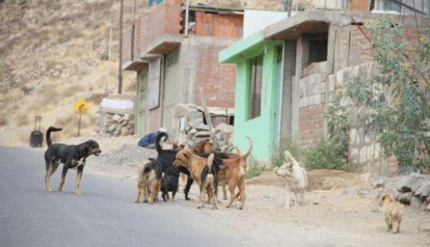Mujer compra veneno para acabar con perros callejeros y el karma se encarga de cobrar su vida
