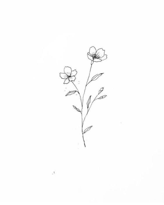 Simple Flower Drawing Image Drawing Skill