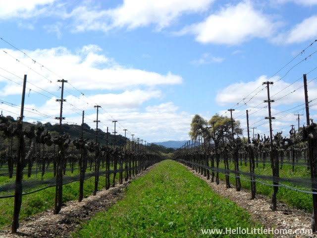 Favorite Things: Visiting a Winery in Southern California | Hello Little Home