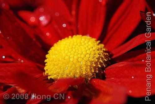 botanic_garden11
