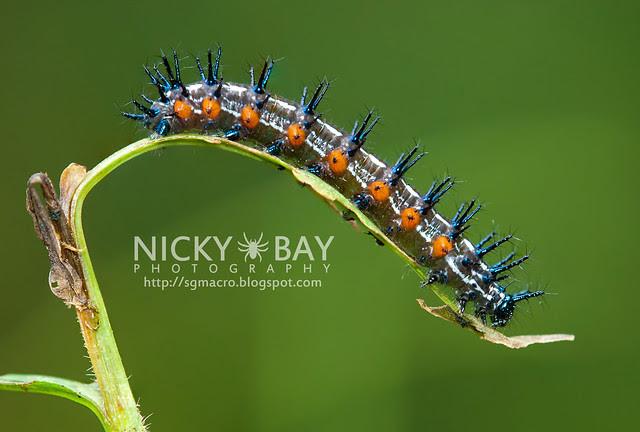 Caterpillar - DSC_1622