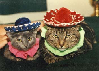 http://www.slowtravtours.com/images/planning/cat_sombreros.jpg
