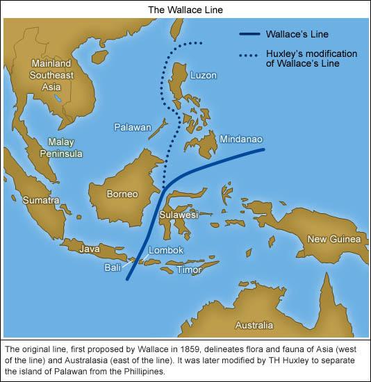 Image result for The Wallace Line