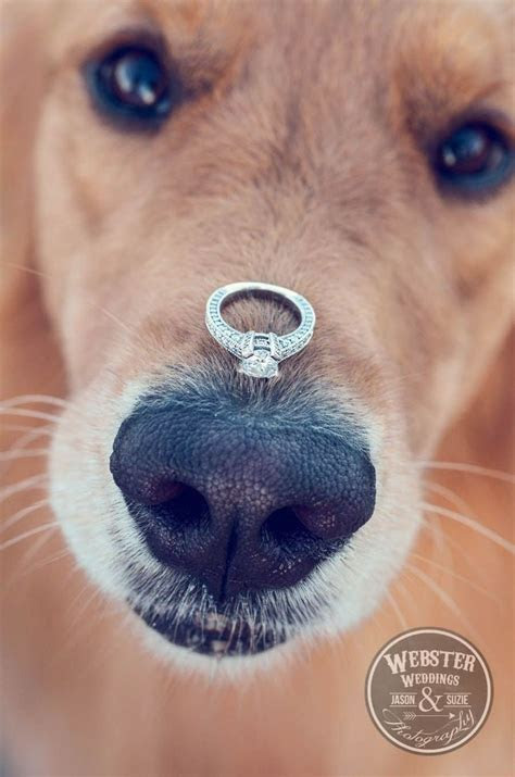 Best 25  Dog engagement photos ideas on Pinterest   Dog