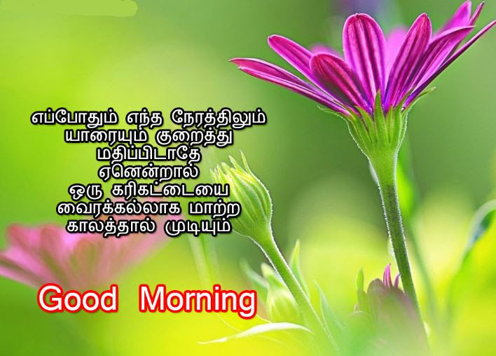 Good Morning Flowers With Messages Tamil Flowers Healthy
