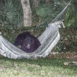 BEAR_HAMMOCK_DAYTONABEACH_-_MUST_COURTESY_RAFAEL_TORRES_2
