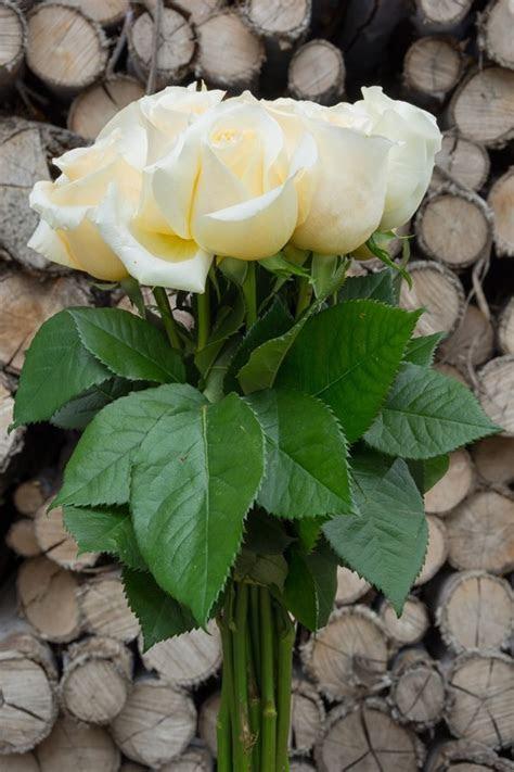Wholesale Creme de la Creme Wedding Cream Roses Online