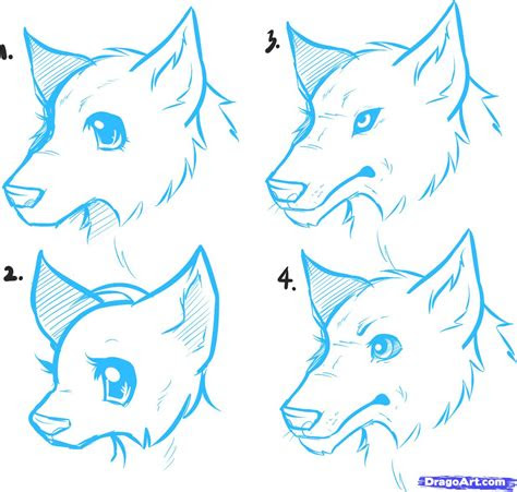 draw anime wolves anime wolves step  step