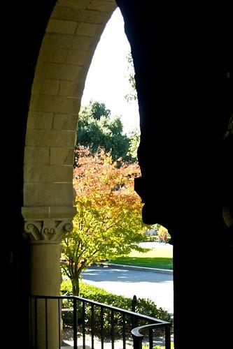 Stanford foliage