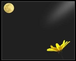 solitudine lunasolepart