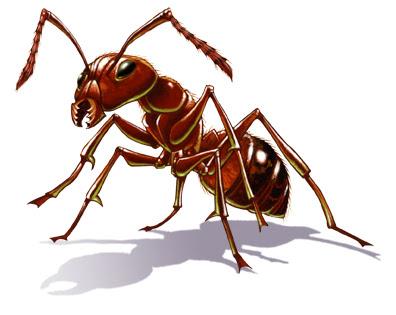 Perierga.gr - Γιγάντια πολιτεία μυρμηγκιών