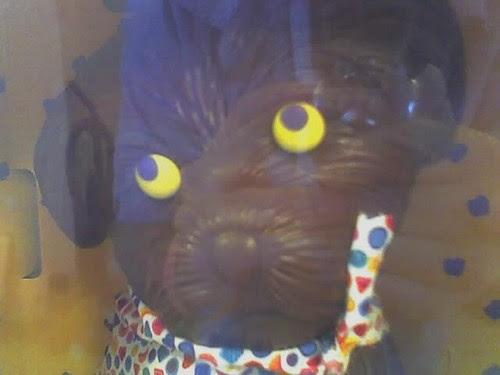 chocolate dog 1