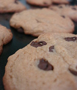 Chocolate chip cookie closeup