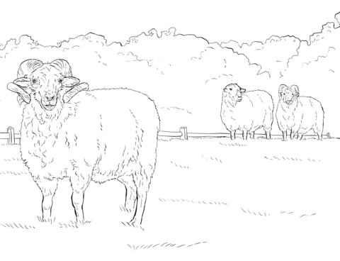 Ausmalbild Hog Island Schaf Ausmalbilder Kostenlos Zum Ausdrucken