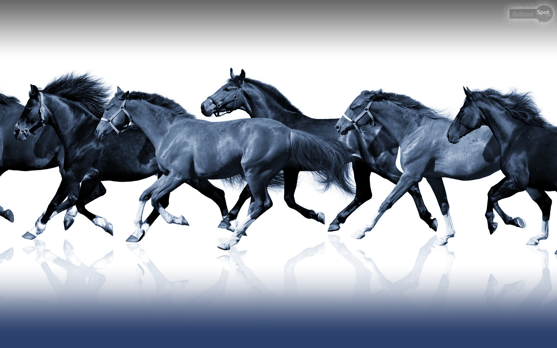 7 Horse Wallpaper Hd For Mobile Artistic Joyful