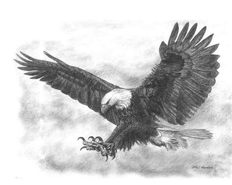 eagle sketch wwwzazzlecombaldeaglepencil