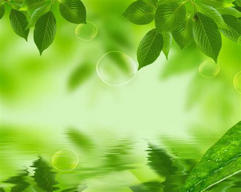 background hijau natural background check
