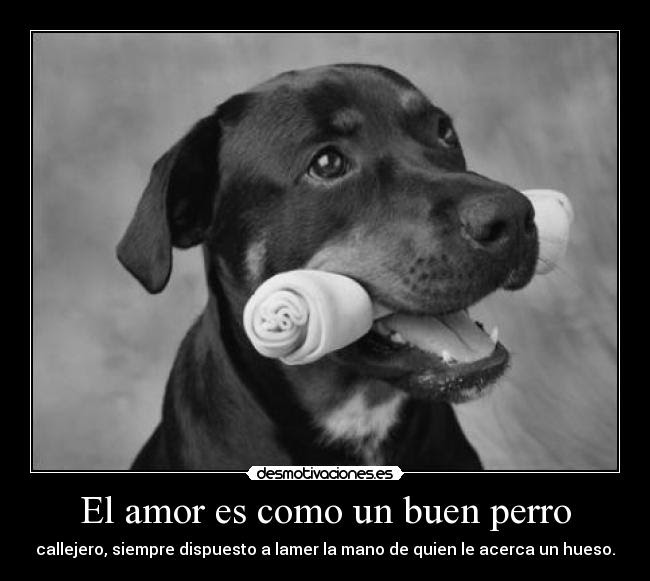 Frasesamor Amor Por Los Perros Frases