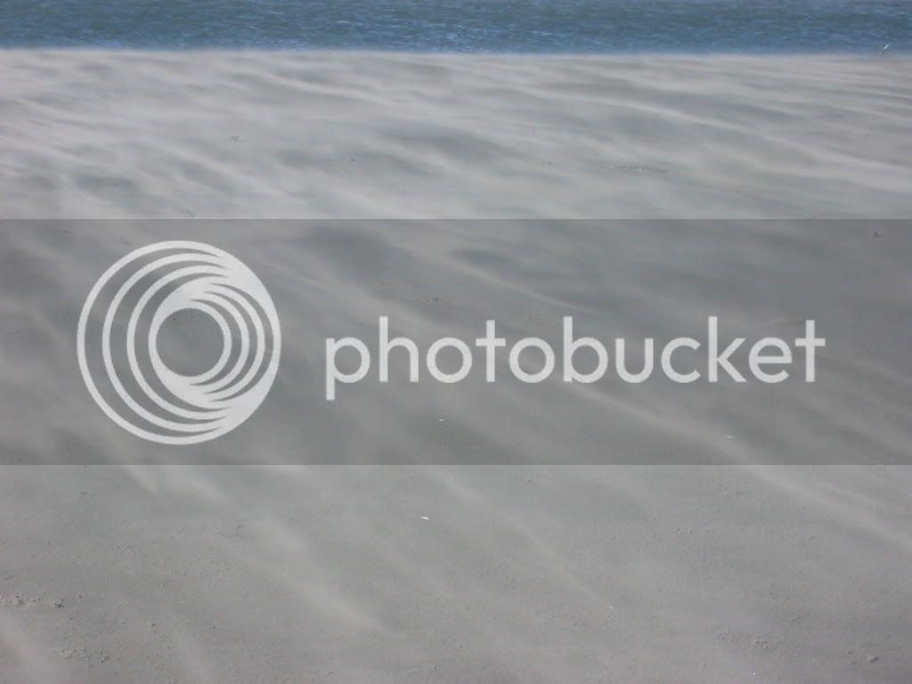 Windswept beach
