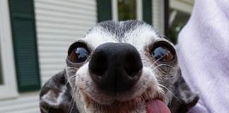 104 Gambar Hewan Marsupilami Asli Terbaik