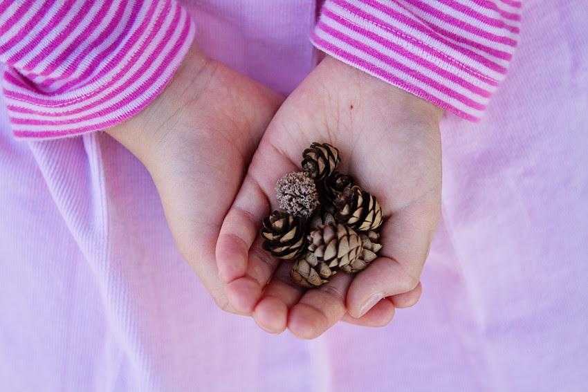 anna pinecones blog