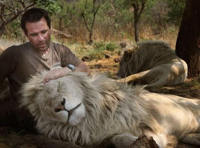 Кевин гладит льва по голове. Фото